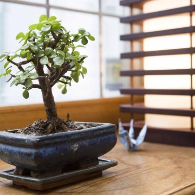 jaapani restoran bonsai